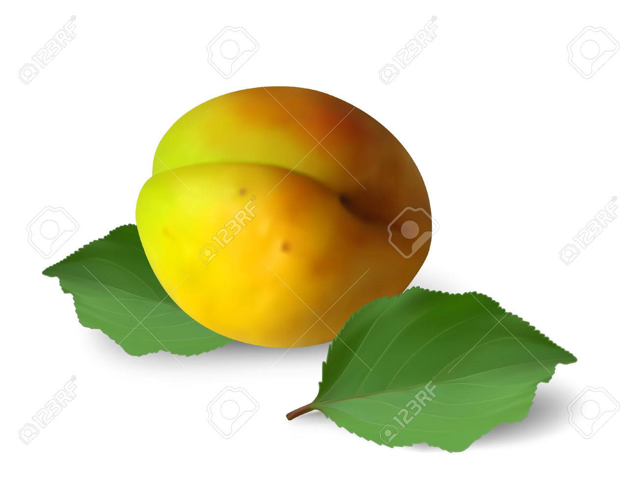 Ripe apricot with leaves on white background. Mesh is used Stock Vector - 7101293