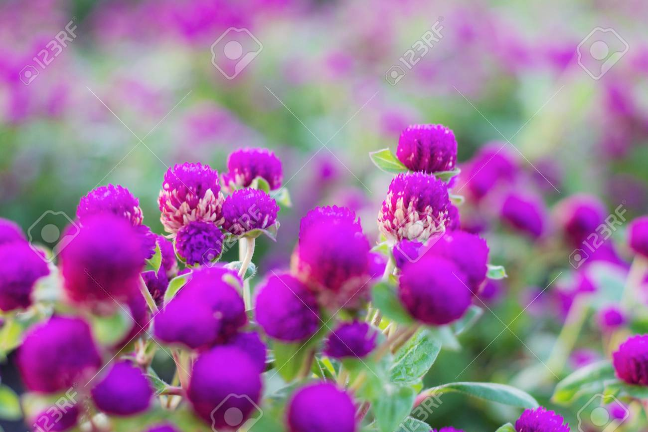 The beauty of flowers and freshness of nature in garden stock photo stock photo the beauty of flowers and freshness of nature in garden izmirmasajfo