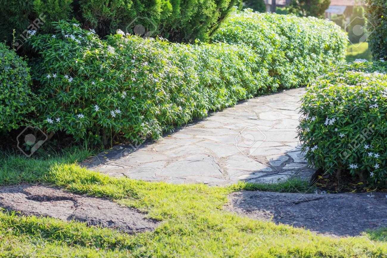 Gehwege Und Zierbäume Im Garten Lizenzfreie Fotos Bilder Und Stock