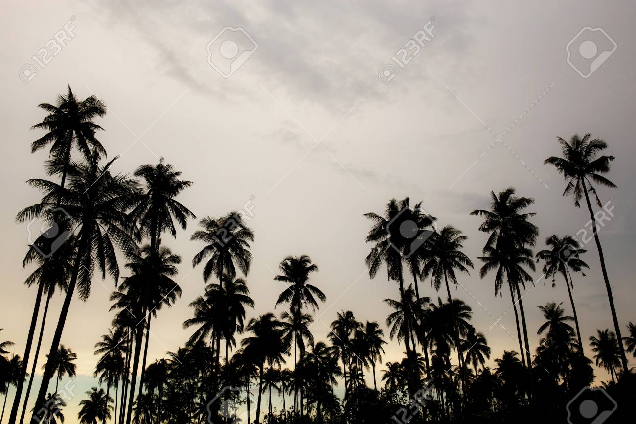 Coconut tree at sky with the silhouette in summer. - 121322287