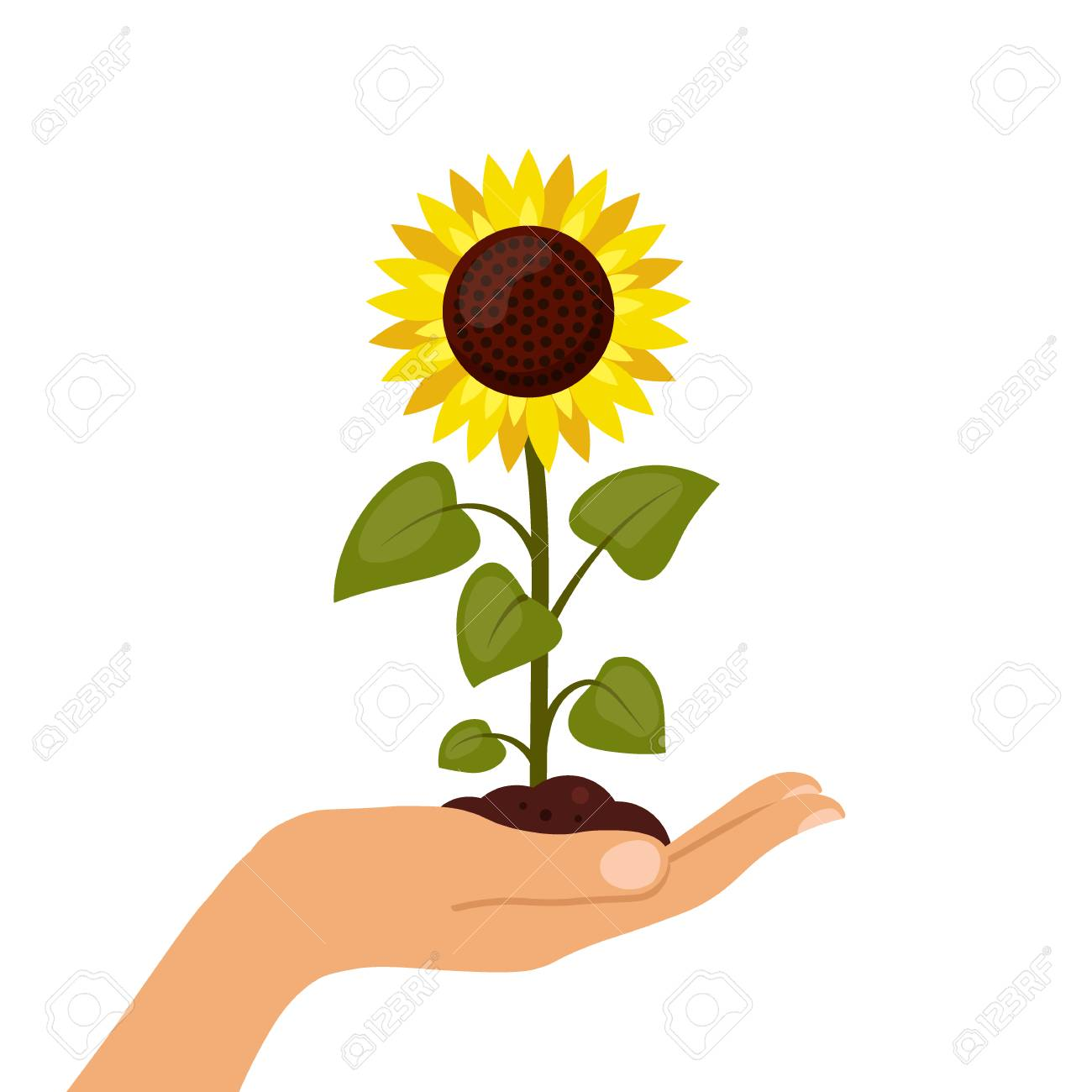 sunflower cartoon in hand isolated on a white background summer rh 123rf com sunflower cartoon background sunflower cartoon wallpaper