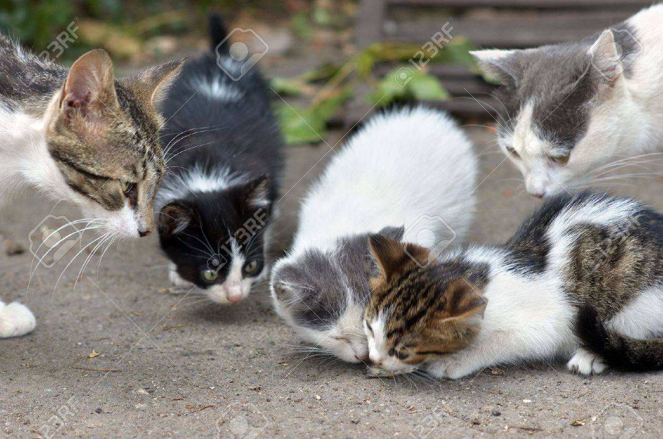 stray kittens are eating, other cats  shows curiosity. Stock Photo - 1208214