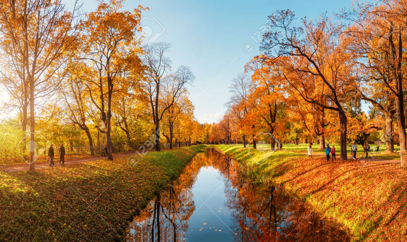Beautiful sunny autumn day. Panorama of the autumn park with walking people. Tsarskoe selo. Russia. - 157151562