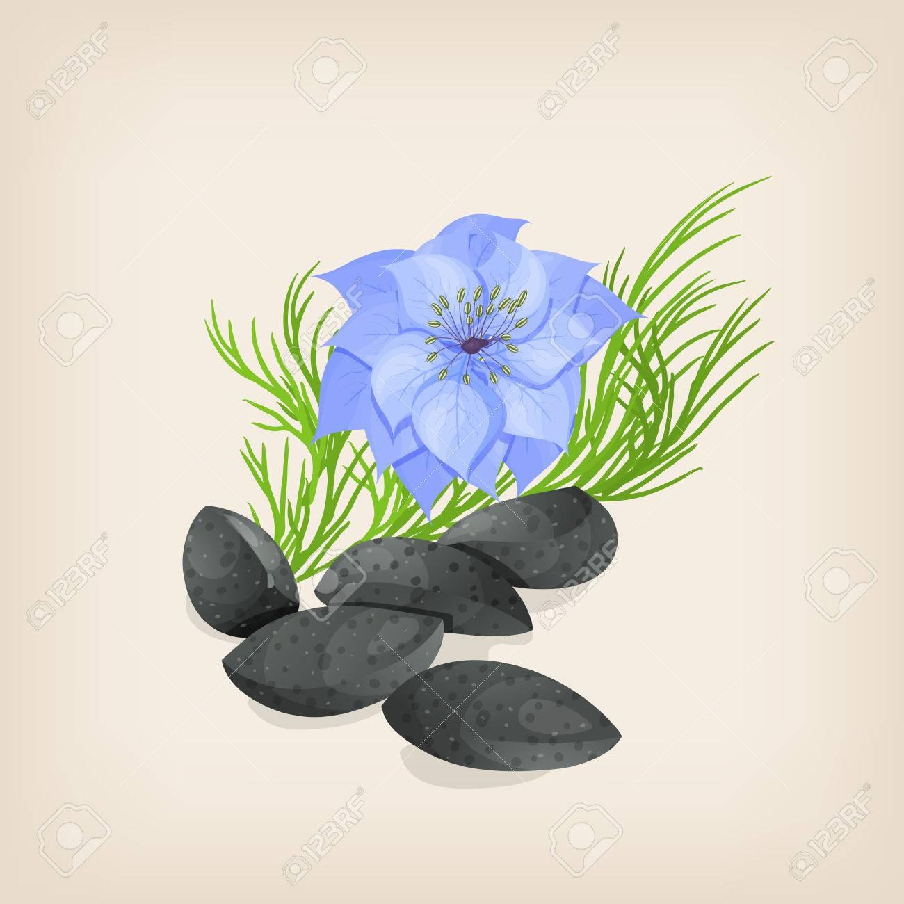 Nigella sativa or fennel flower, nutmeg flower, black caraway, Roman coriander, black cumin, black sesame, blackseed, black caraway, Bunium persicum. - 64531129