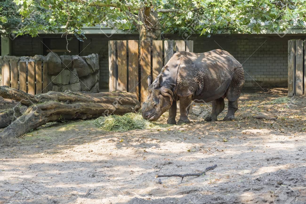 BERLIN, GERMANY - AUGUST 6, 2013: Rhino eating hay in the shade
