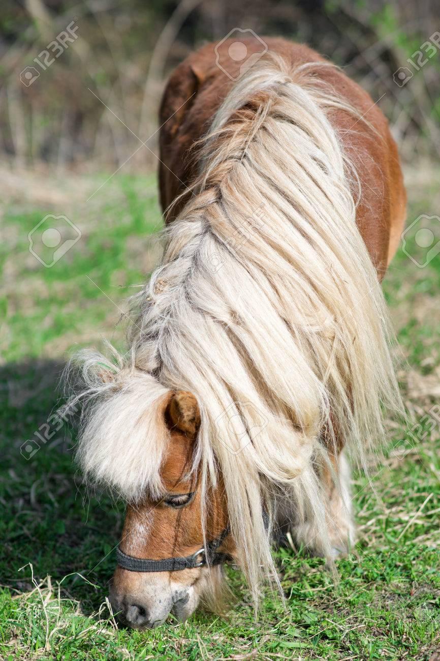 Del potro con pelo largo