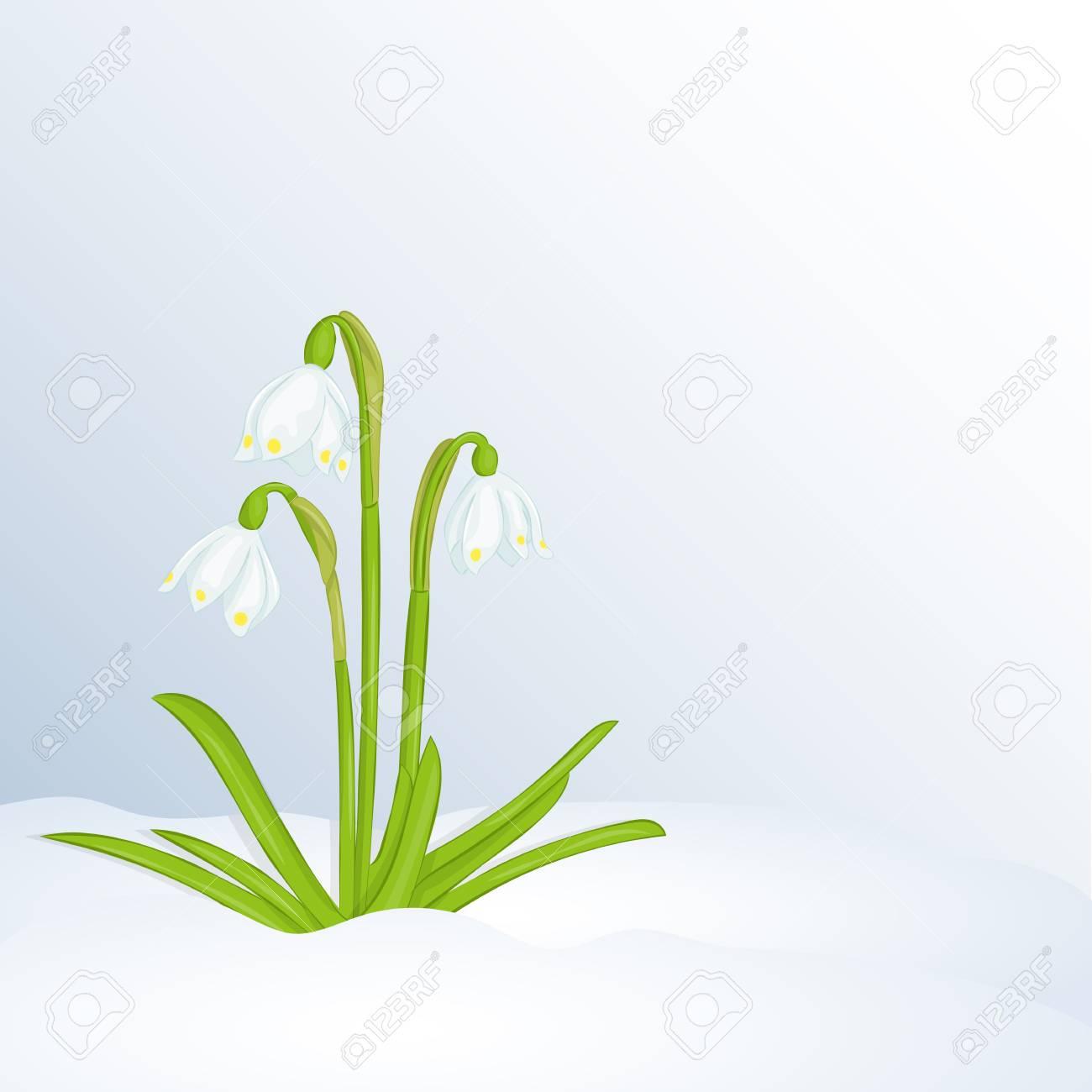 Fundo De Linda Primavera Com Leucojum Na Neve Cartões De Felicitações Com A Primavera Ou O Dia Da Mulher Modelo De Cartaz Ou Cartaz De Férias No