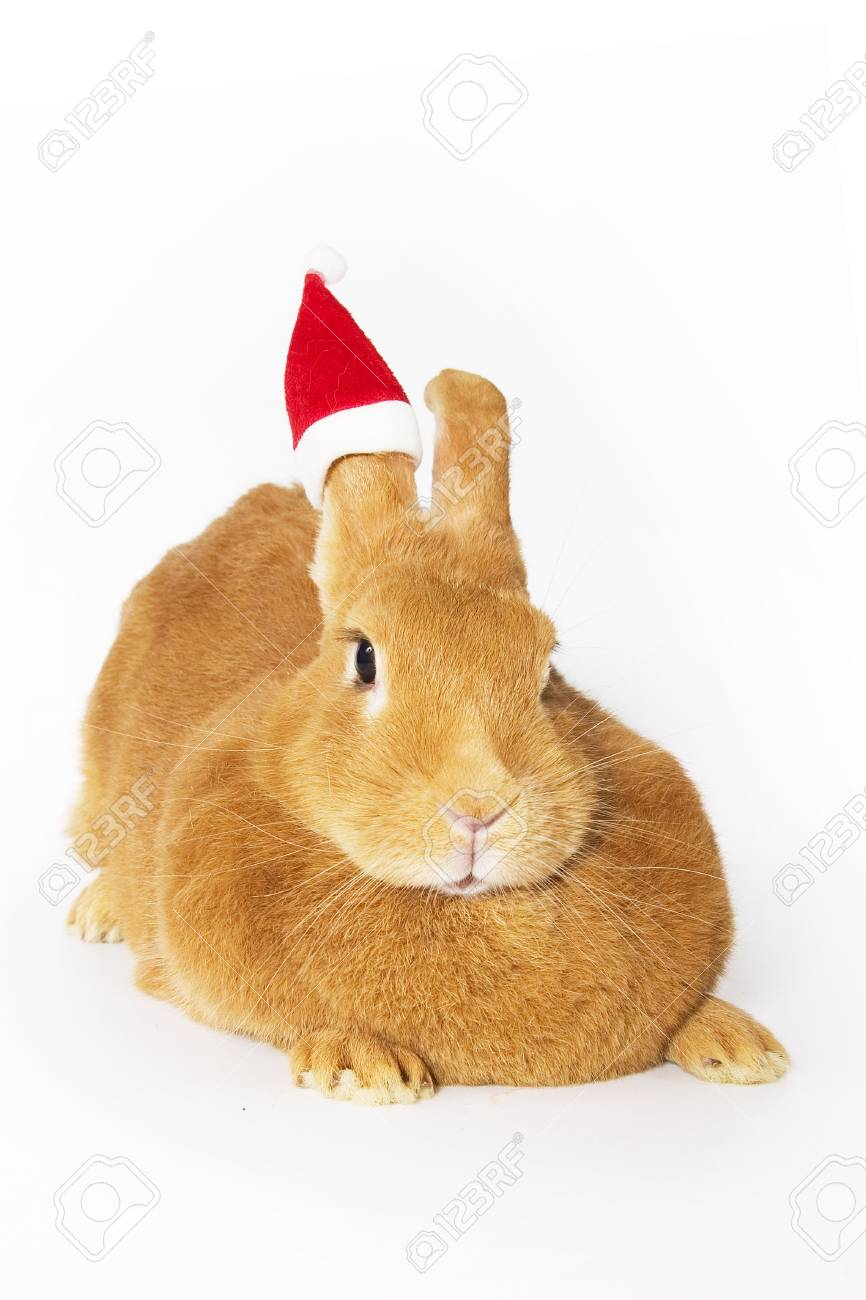 Bunny wearing santa hat Stock Photo - 2583281