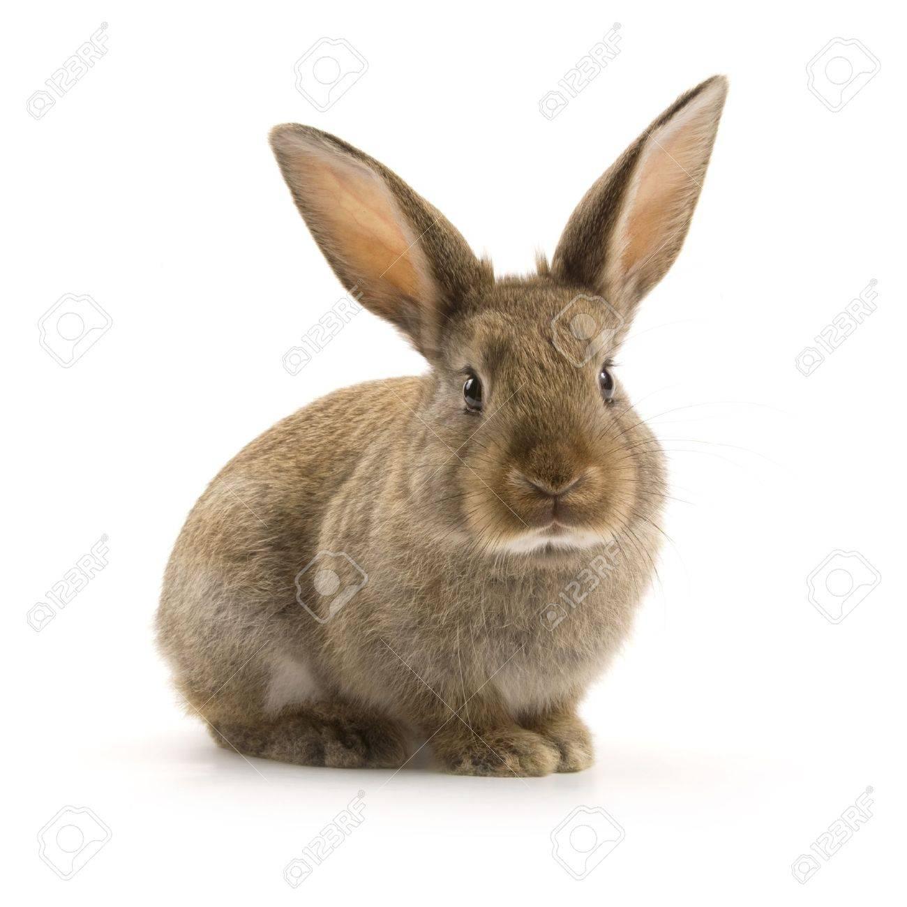 Adorable lapin isol? sur un fond blanc Banque d'images - 9951344