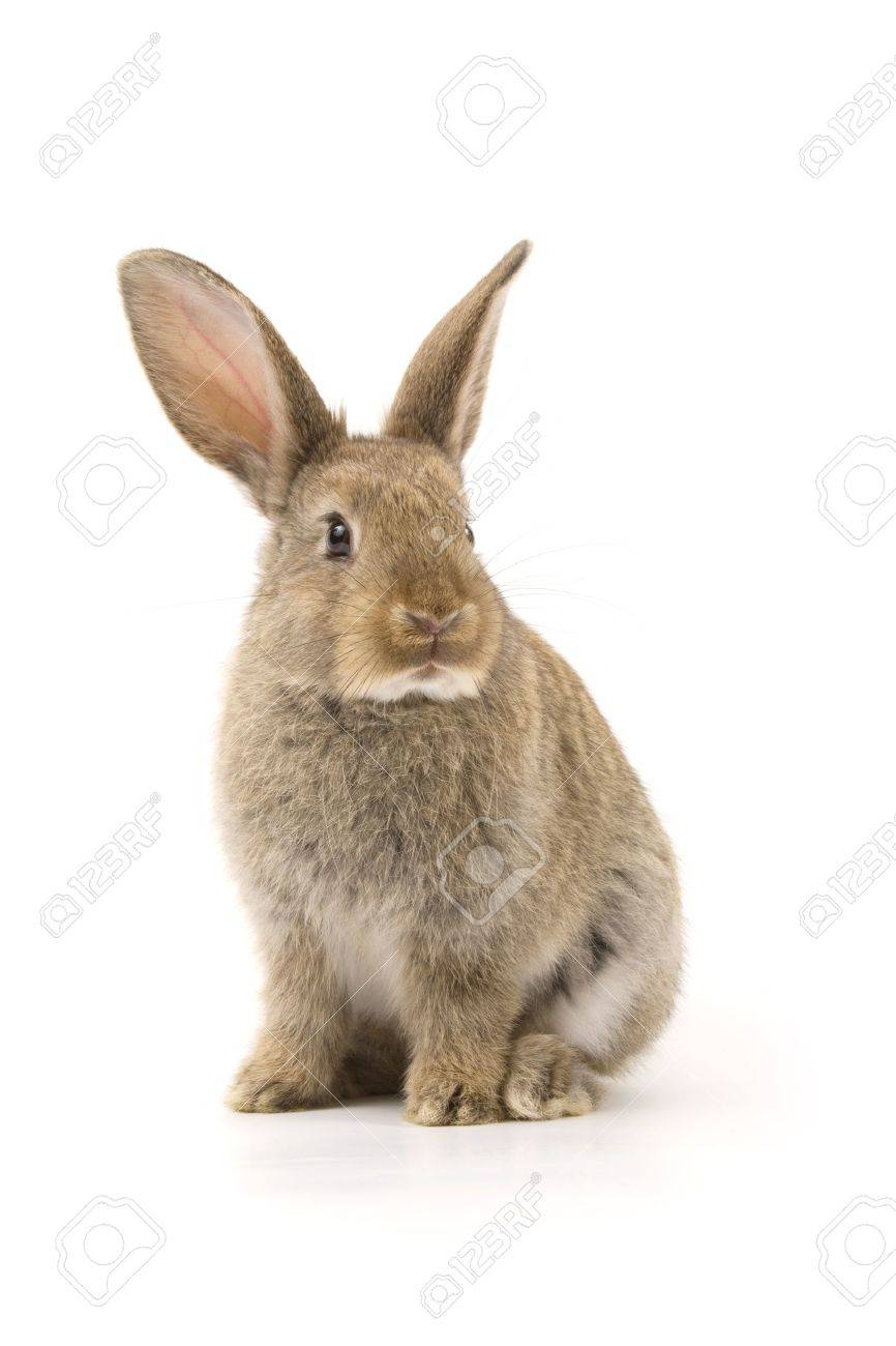 Adorable rabbit isolated on a white background Stock Photo - 9951118