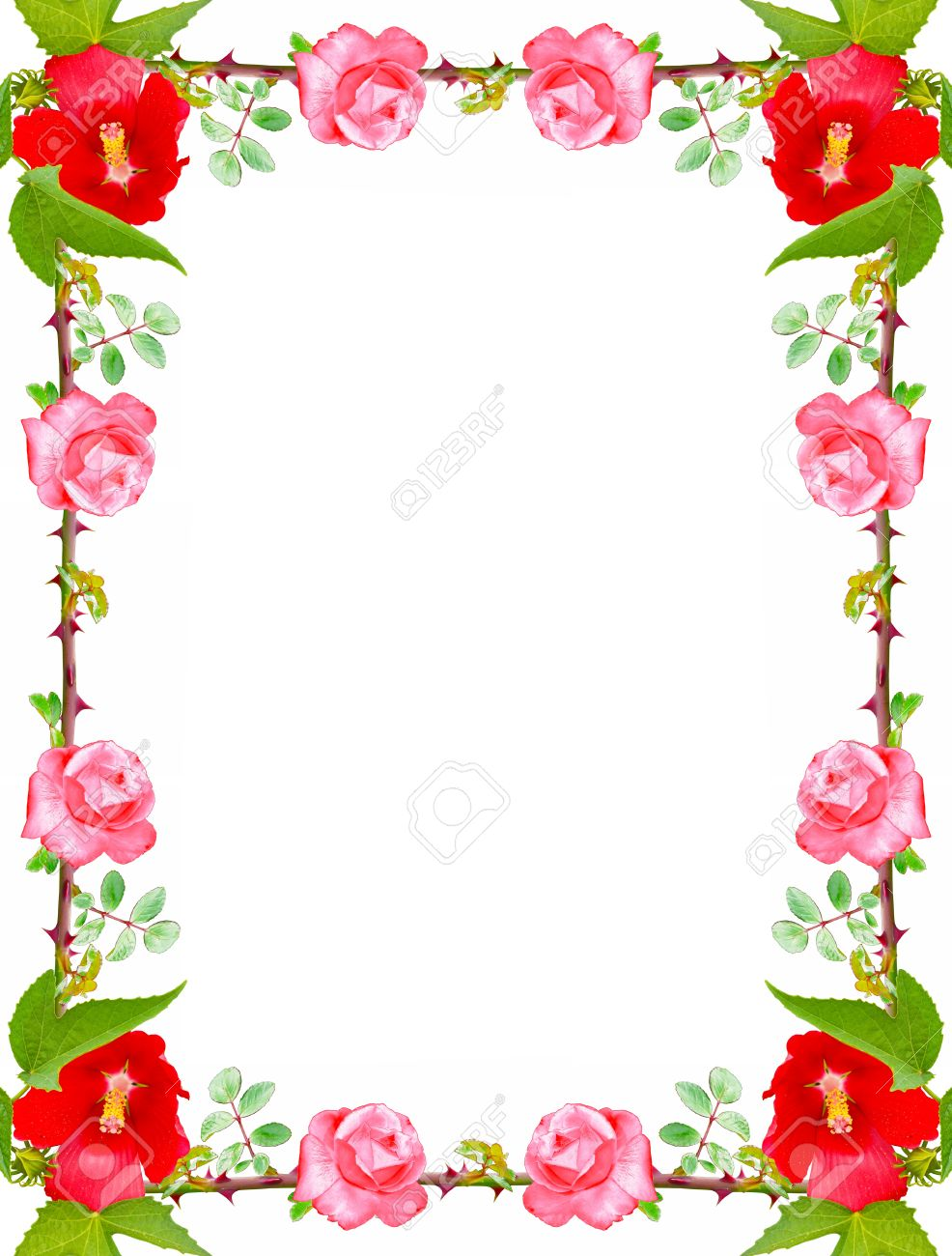 Beautiful Frame Made Of Roses On A White Background Stock Photo ...