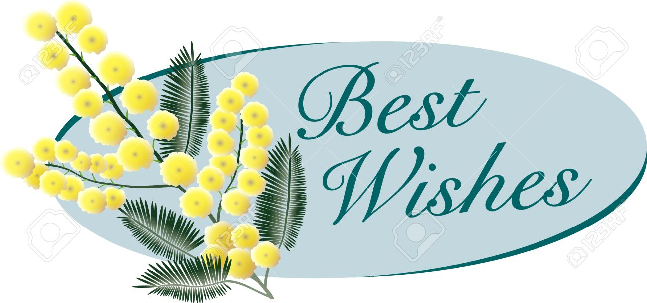 a bunch of mimosa blossoms with best wishes message royalty free
