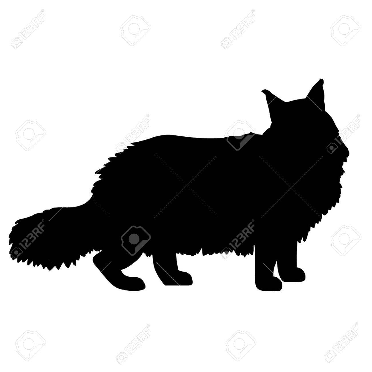 Maine Coon Cat Stock Vector - 16383894