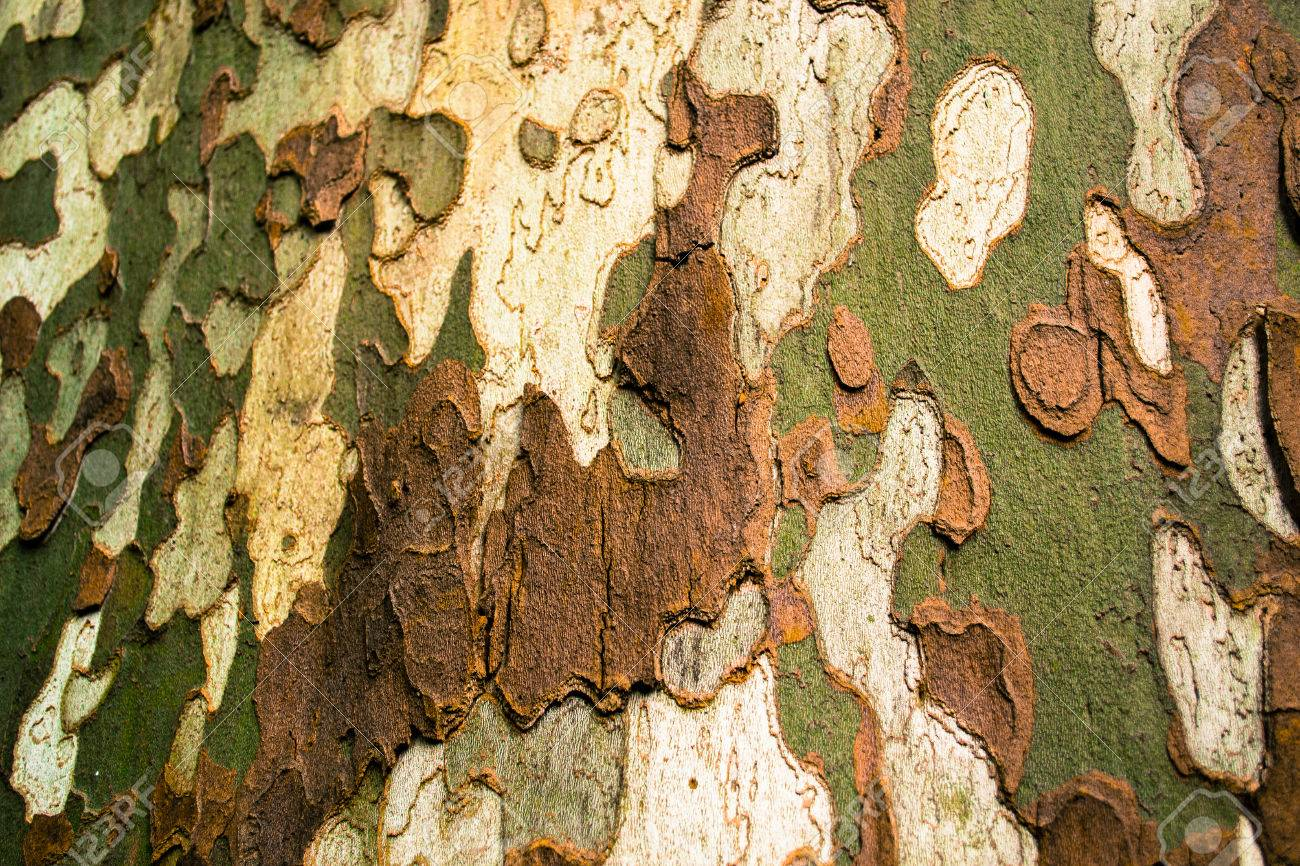 Multi Colored Bark Of A Tree Outdoor Stock Photo Picture And