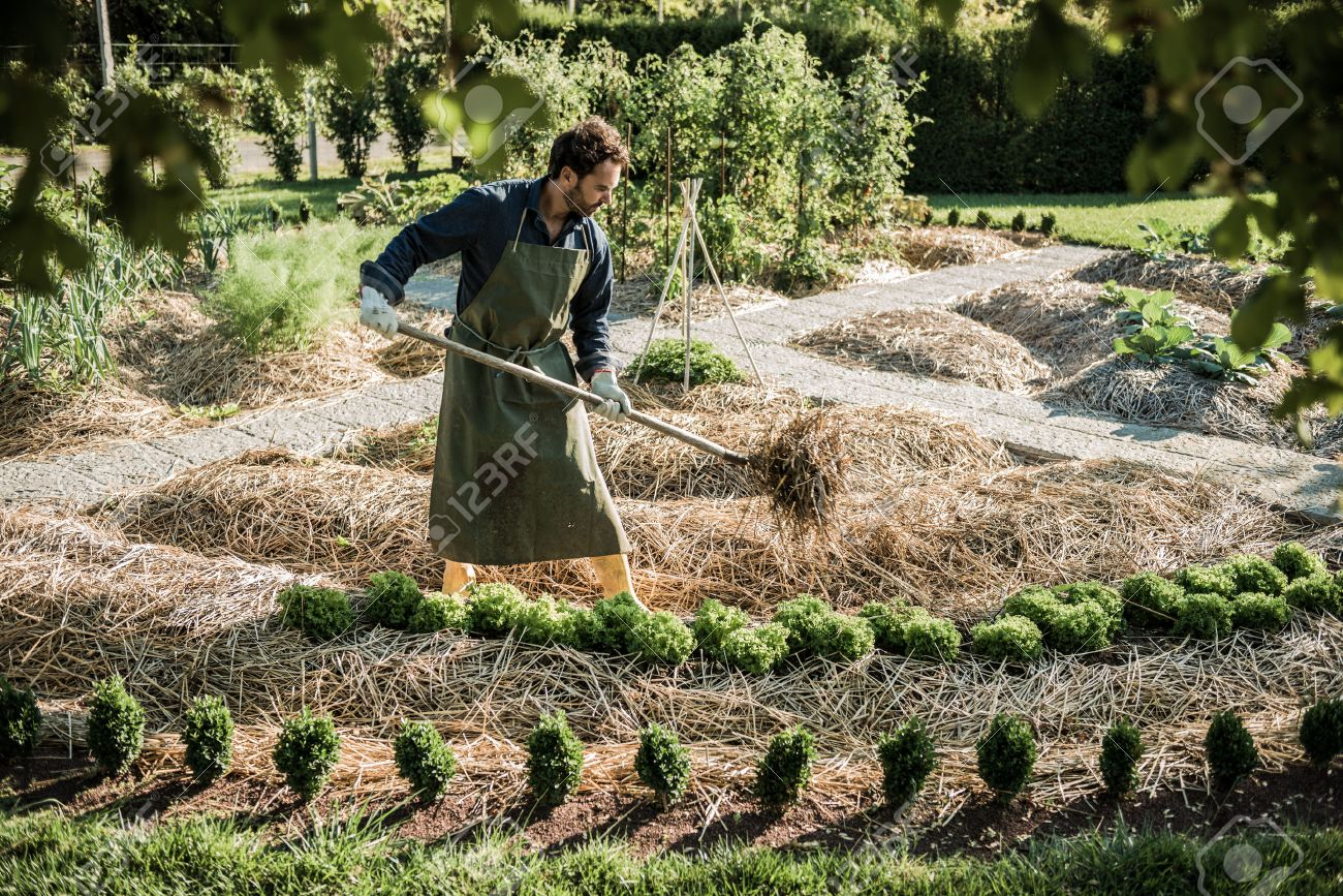 Man working on a synergistic vegetable garden - 28508665