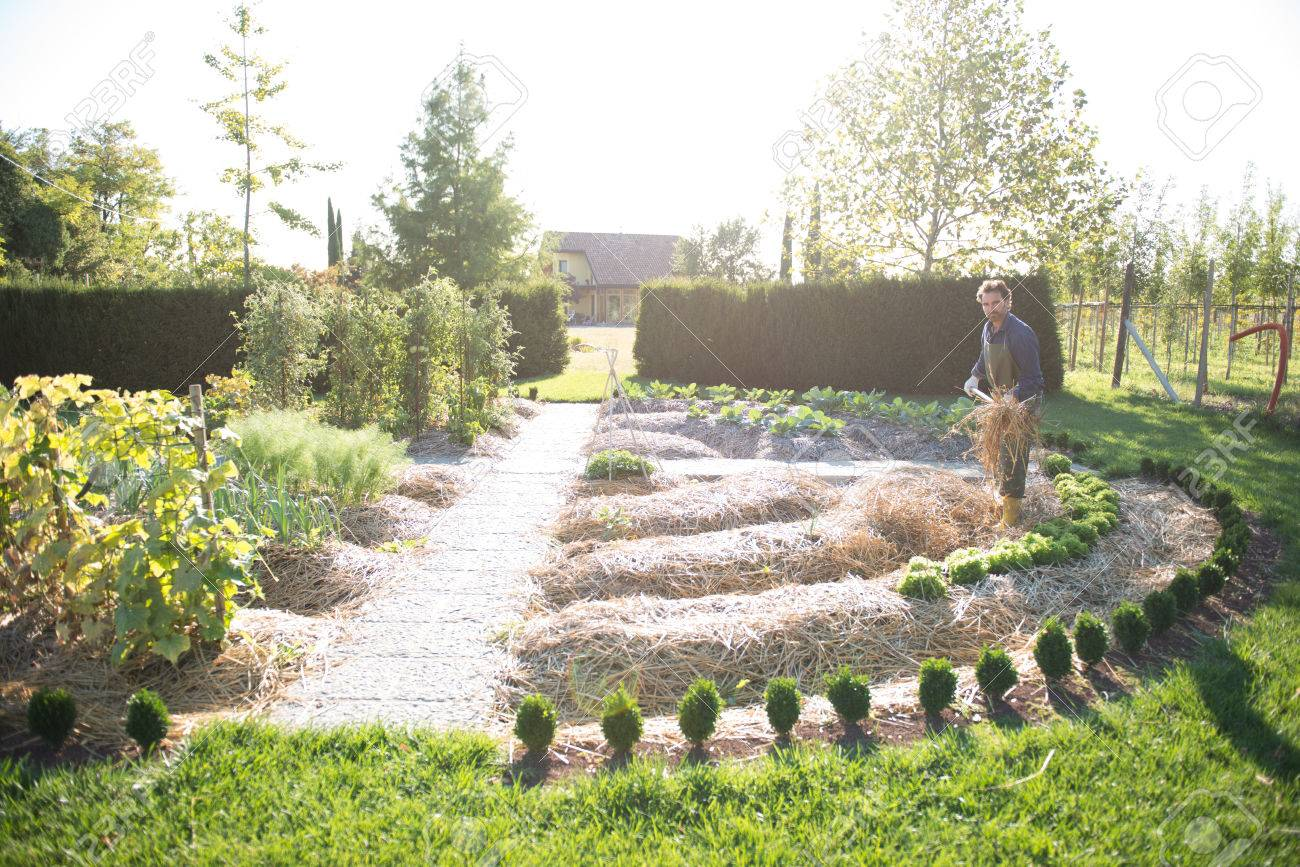 Man working on a synergistic vegetable garden - 28508666