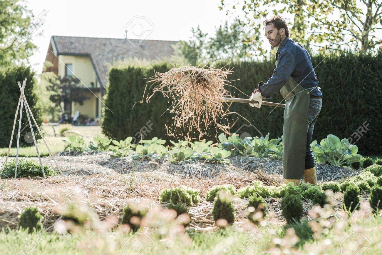 Man working on a synergistic vegetable garden - 28508670