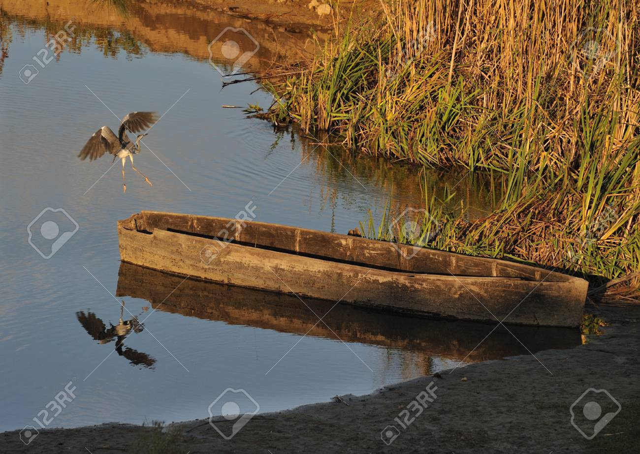heron flew from a wooden boat Stock Photo - 13167304