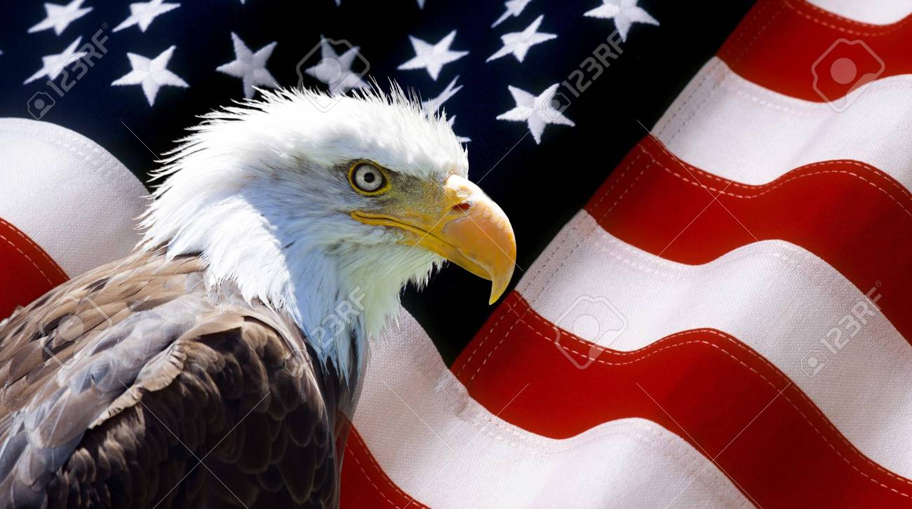 Background Wallpaper North American Bald Eagle On American