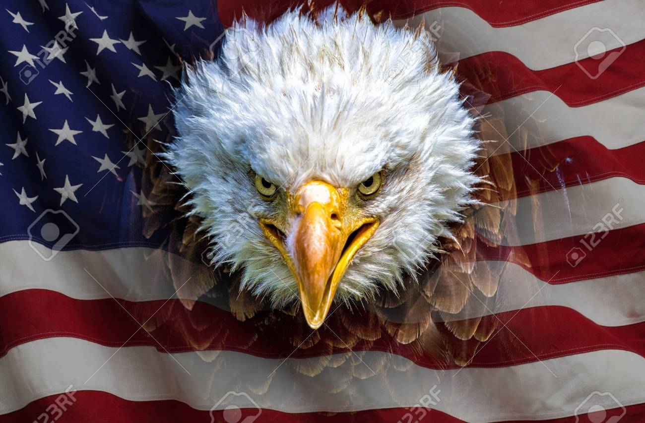 An Angry North American Bald Eagle On American Flag Stock Photo