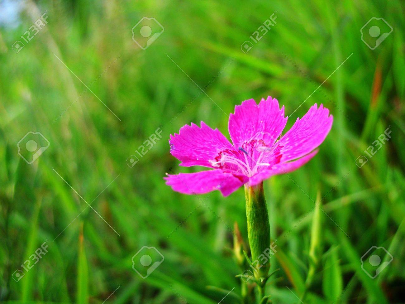 Nature Of Some Beautiful Flowers Stock Photo, Picture And Royalty ...