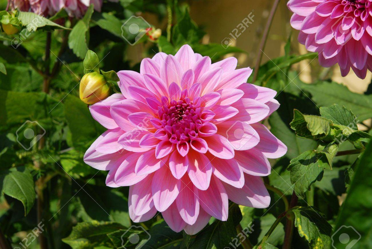 Nature Of Some Beautiful Flowers Stock Photo Picture And Royalty