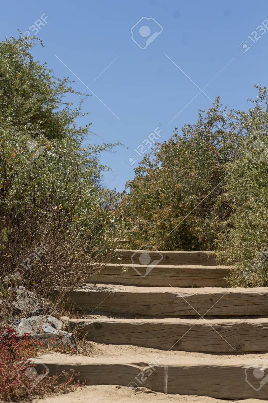 Escaliers Dans Une Réserve Faunique Menant à La Terrasse Faite De Bar En Bois Utilisé Dans Un Chemin De Fer