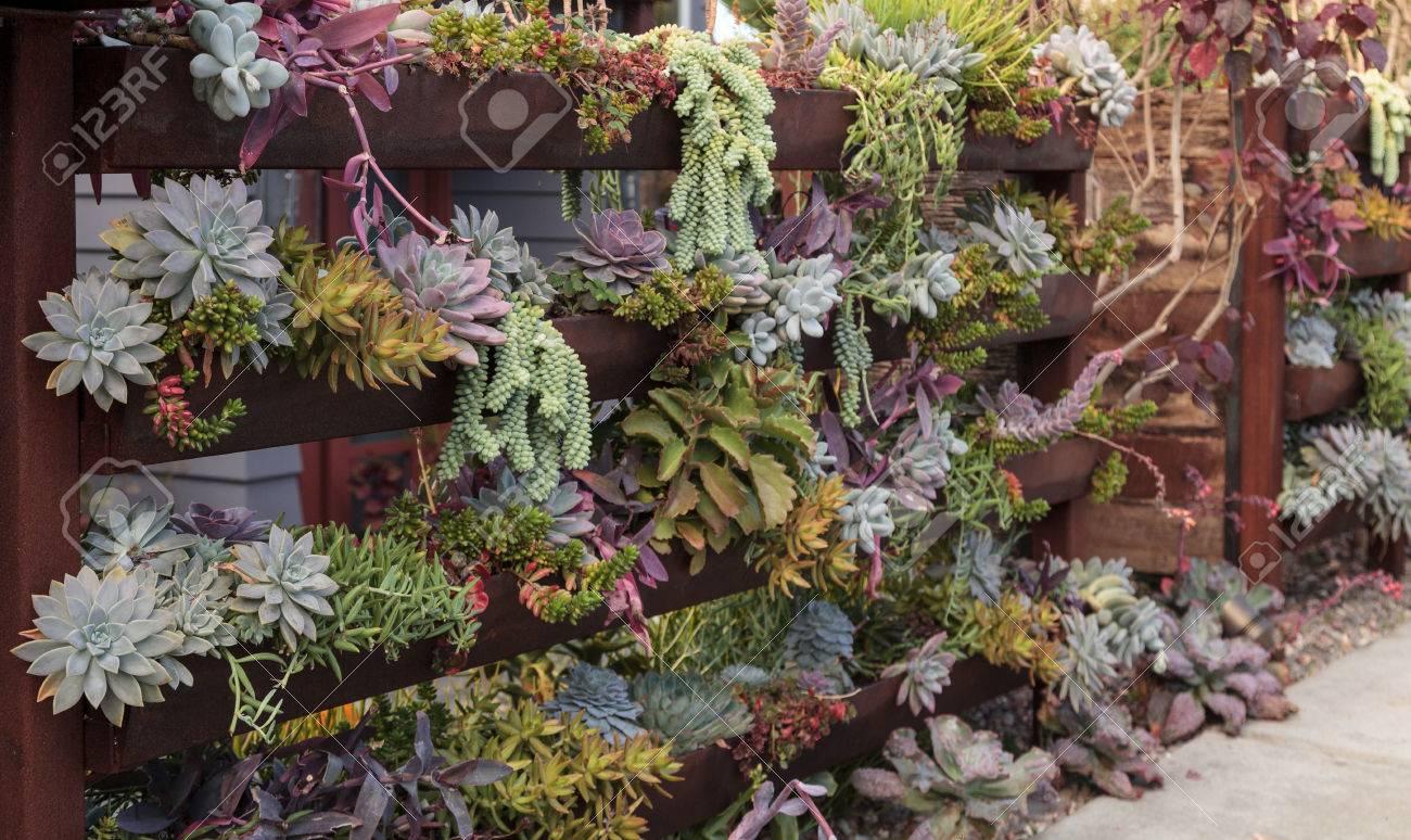 Jardin Vertical Planté Mur Avec Des étagères Pour Contenir Plusieurs ...