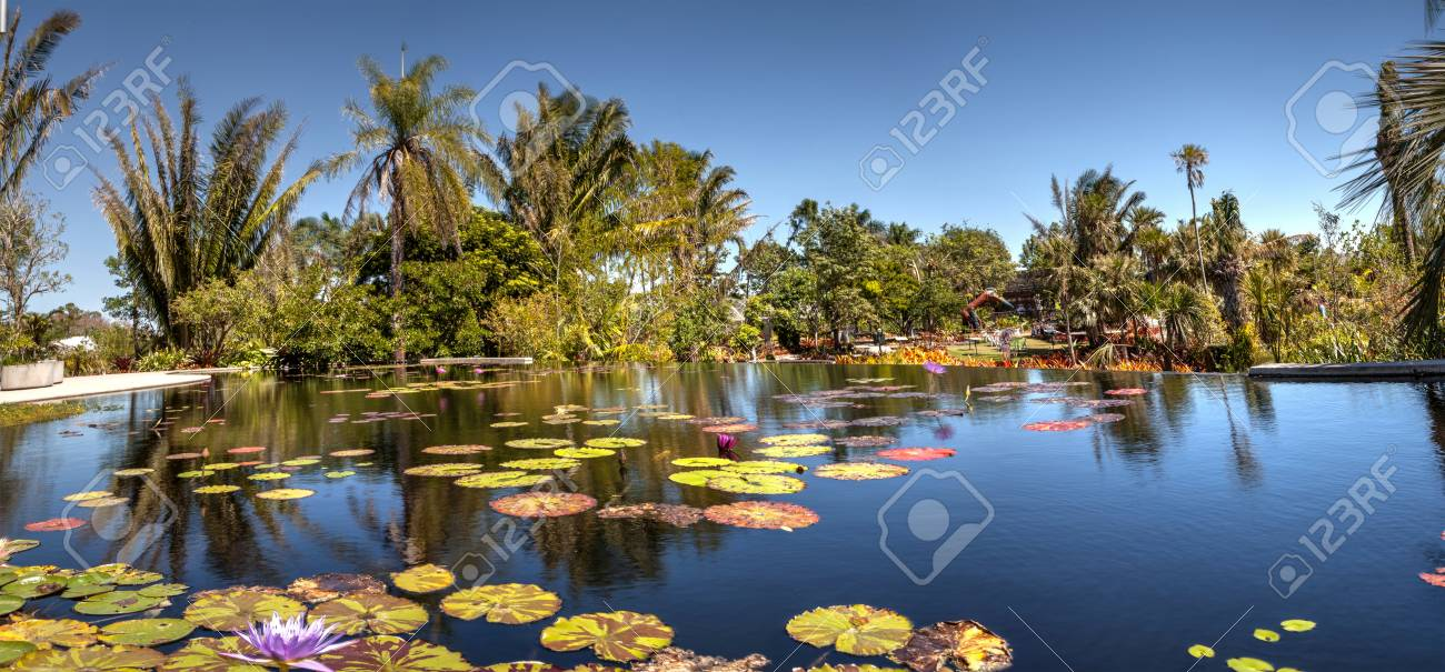 Naples, Florida, USA – March 4, 2018: Reflective pond with water lilies and plants at the Naples Botanical Gardens in Naples, Florida. Editorial use. - 105013687