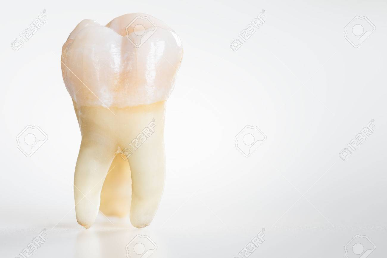 real molar teeth stock photo picture and royalty free image image