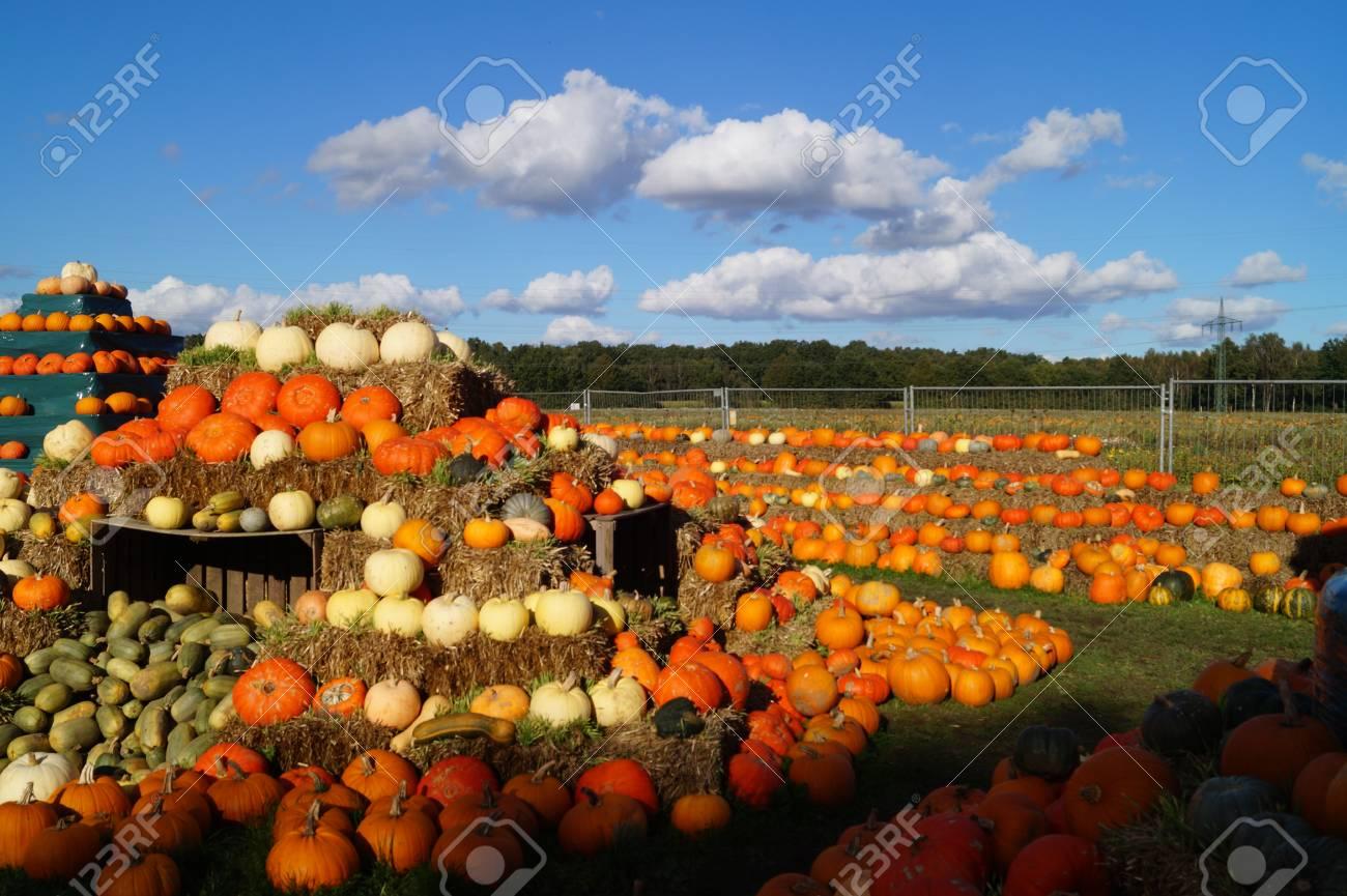 Pumpkins on a Market - 102238359