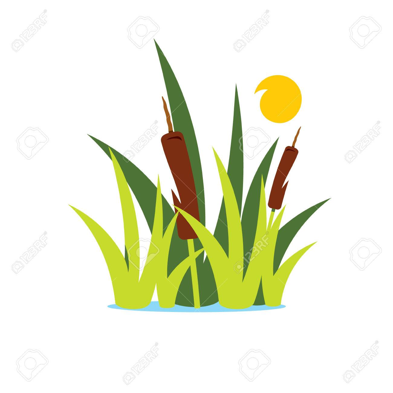 aquatic vegetation and sun isolated on a white background royalty rh 123rf com Ground Grass Vector Free Grass Illustration