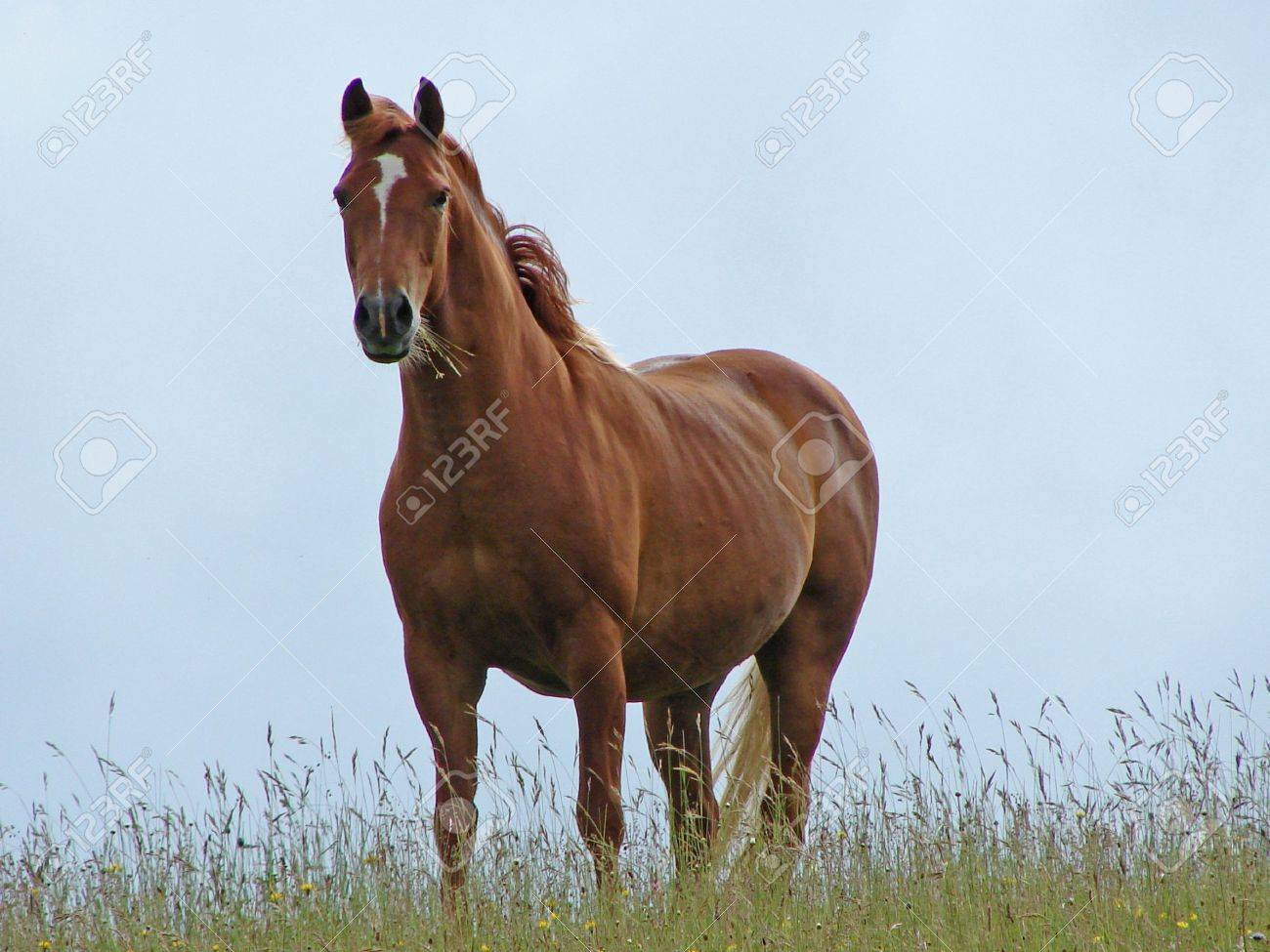 Brown horse on the skyline Stock Photo - 1117592