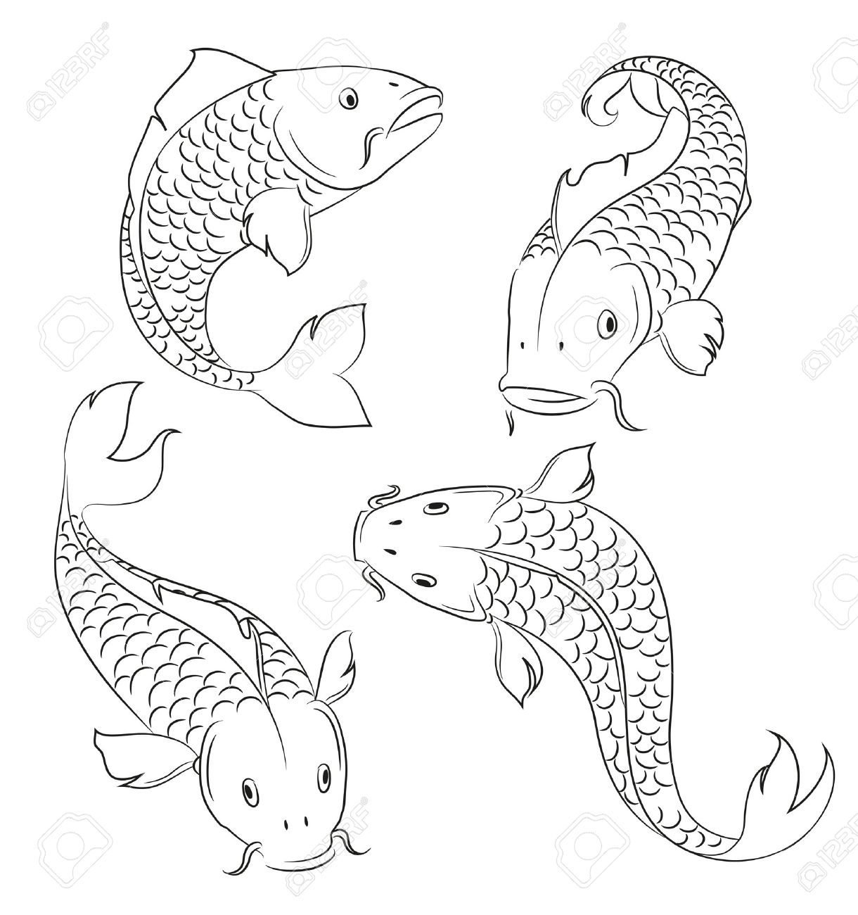 Carps sketches on a white background Stock Vector - 22498495