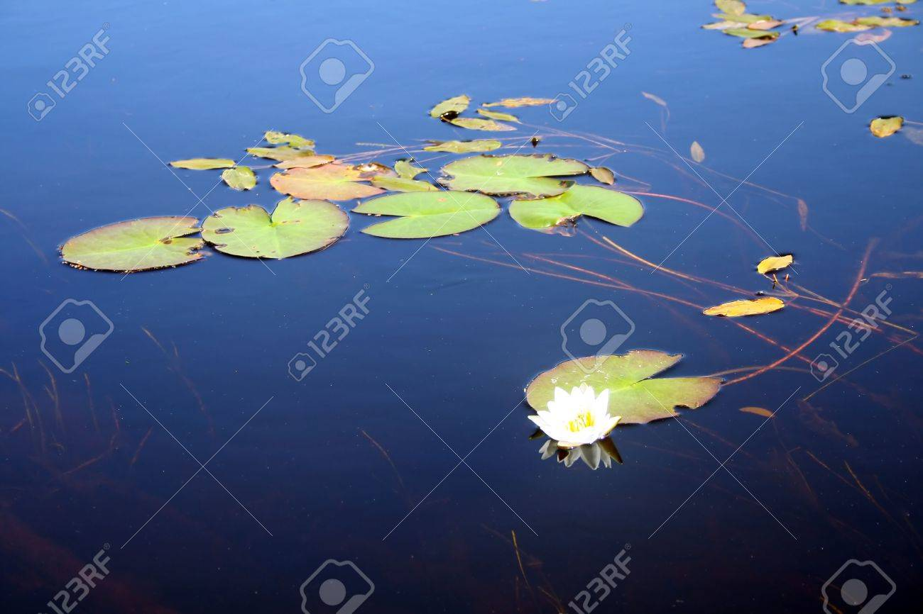 Lotus flower in hindu iconography is the seat of deities stock lotus flower in hindu iconography is the seat of deities stock photo 860430 dhlflorist Choice Image