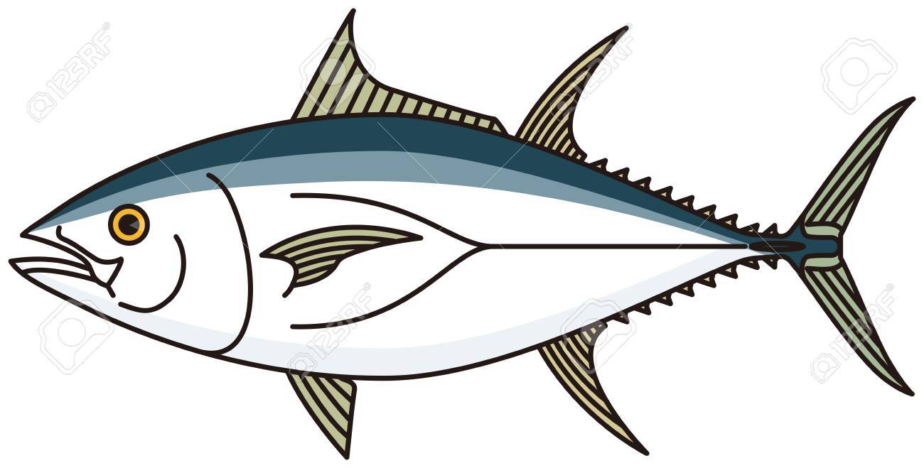 tuna fish vector royalty free cliparts vectors and stock illustration image 68571137 tuna fish vector
