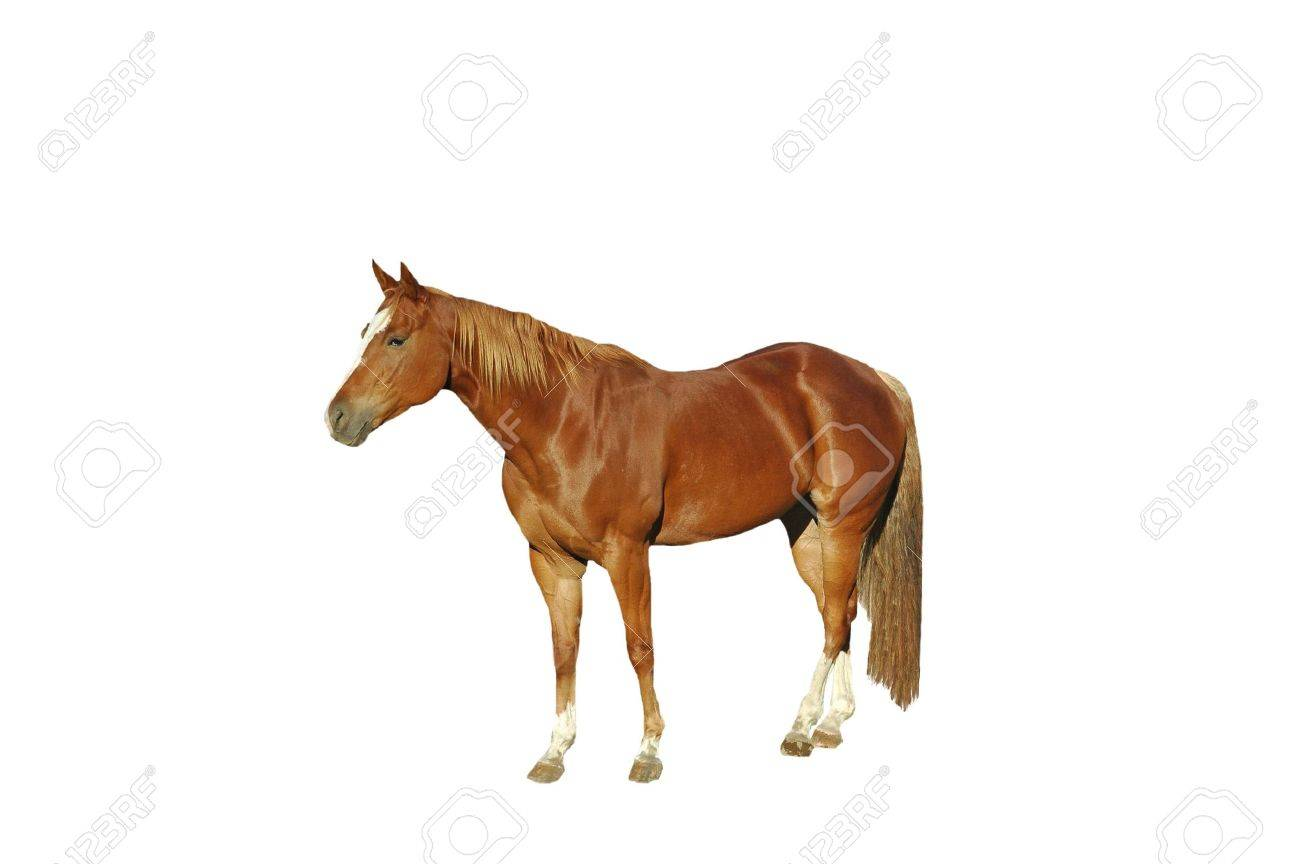 A isolated shot of a horse tken on a ranch in Indiana Stock Photo - 2590785