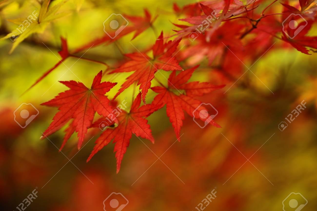 Autumn leaves Stock Photo - 14715542