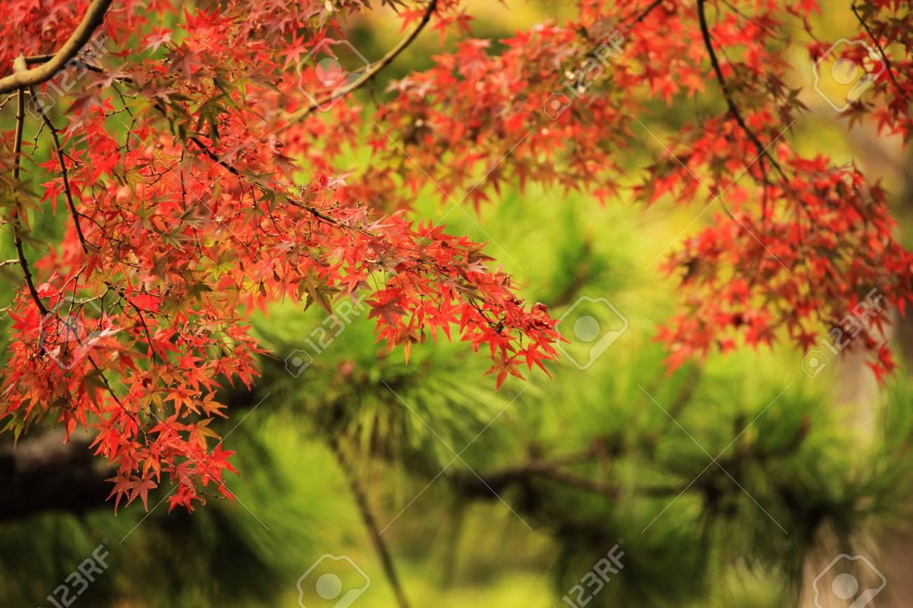 autumn fall Stock Photo - 26810678
