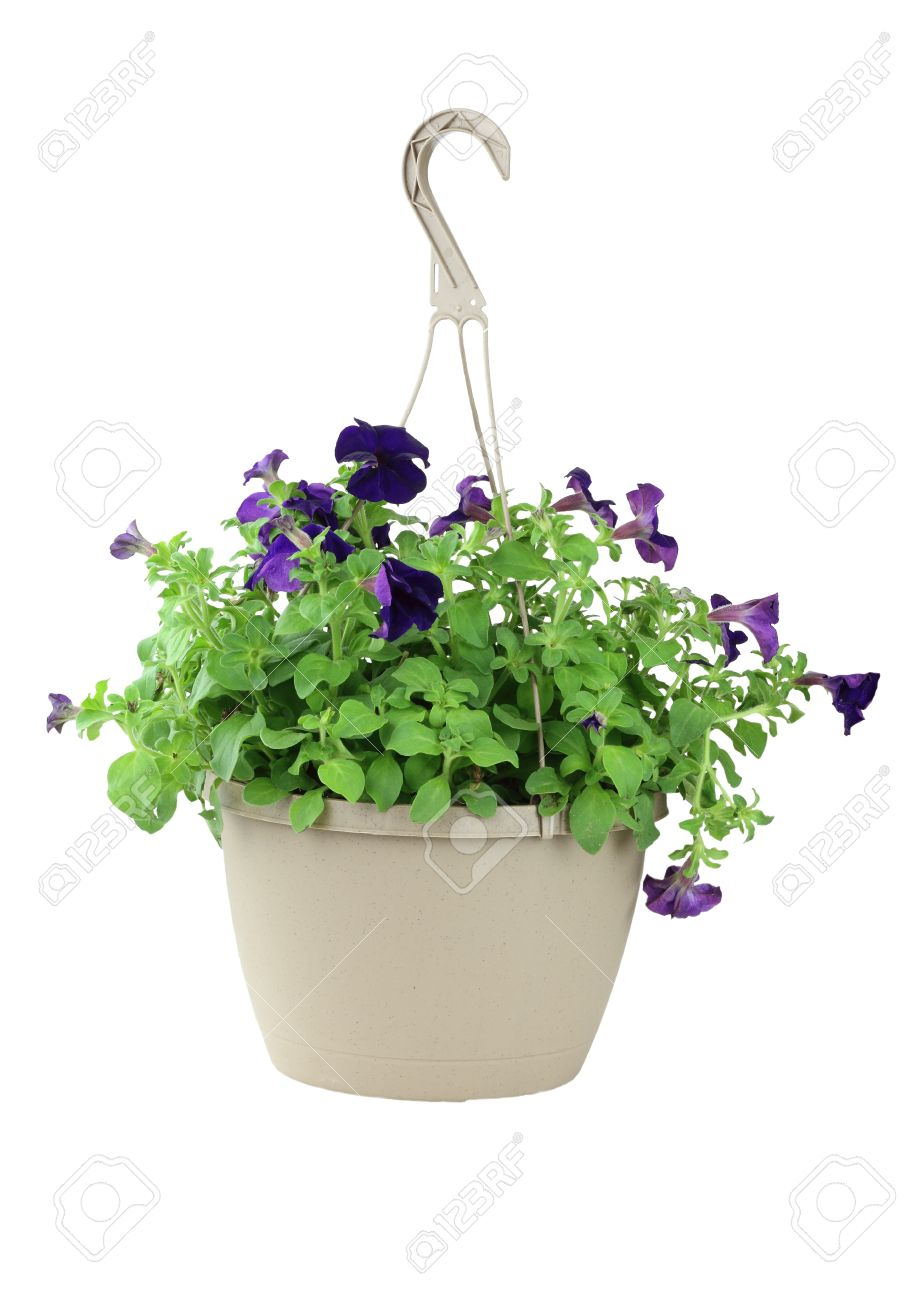 Hanging Flower Baskets Images & Stock Pictures. Royalty Free ...