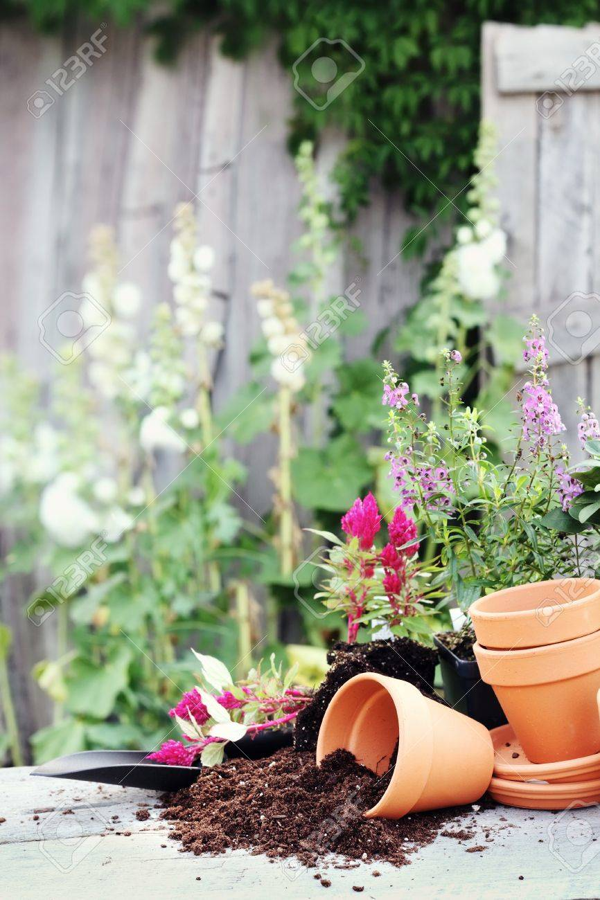 Rustic table with terracotta pots, potting soil, trowel and flowers in front of an old weathered gardening shed. Stock Photo - 9957921