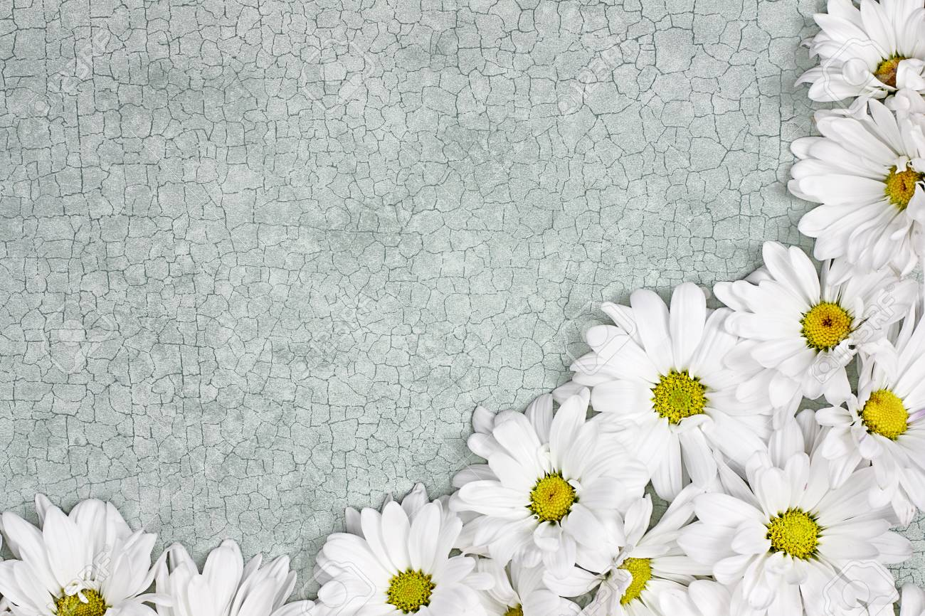 Fresh Daisy Flowers Over Green Craquelure Background With Room