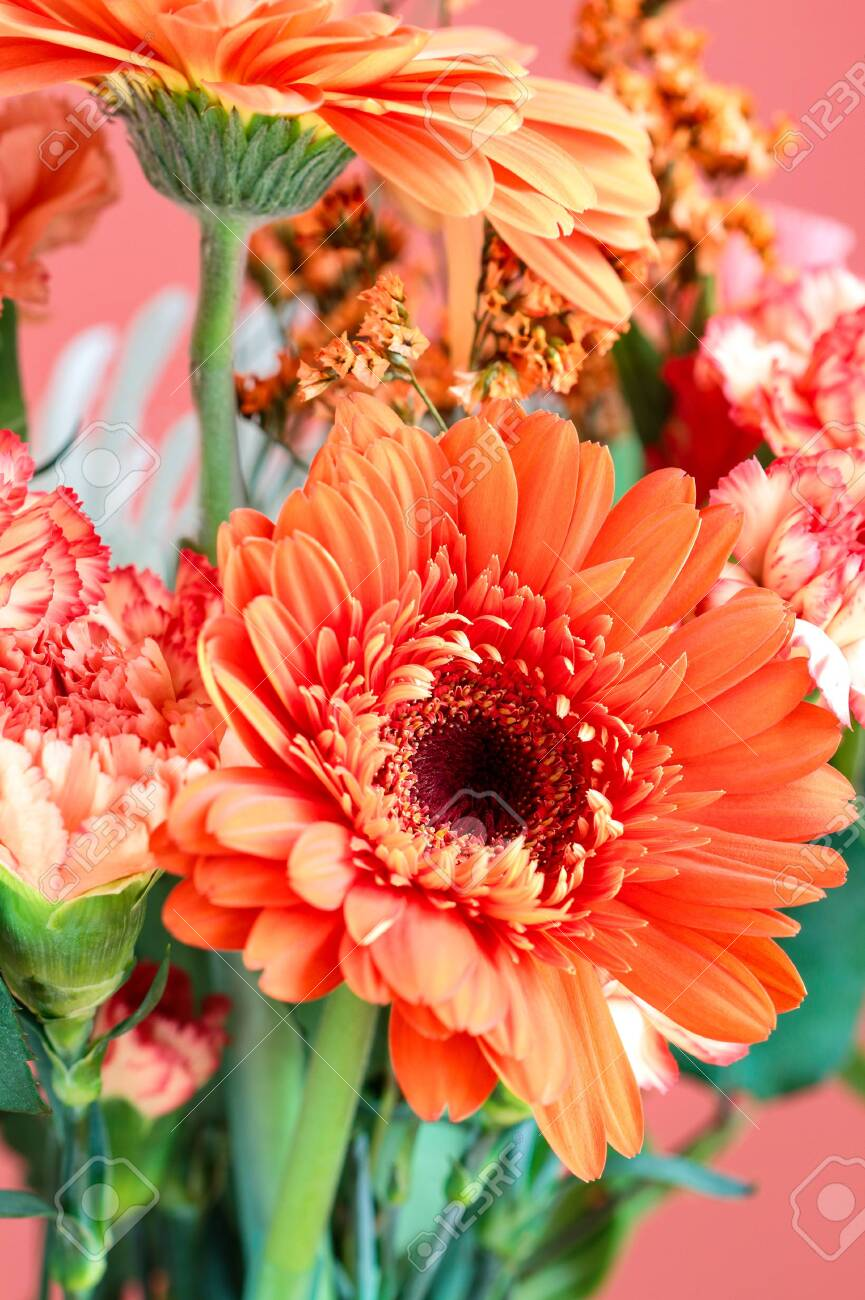 Selective Focus Of A Beautiful Coral Colored Gerbera Daisy Among Stock Photo Picture And Royalty Free Image Image 135191062