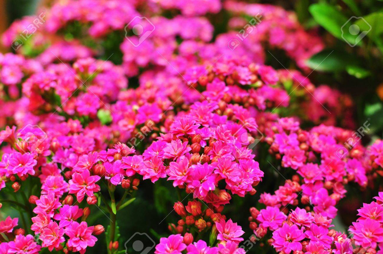 Pink Potted Flowers Stock Photo Picture And Royalty Free Image