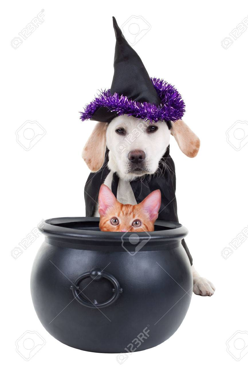 Funny Halloween pets witch dog and cat - 30901646