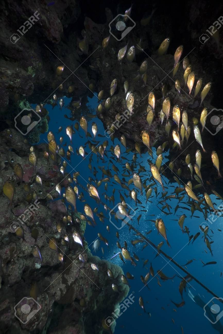 ocean,coral and fish Stock Photo - 6819620