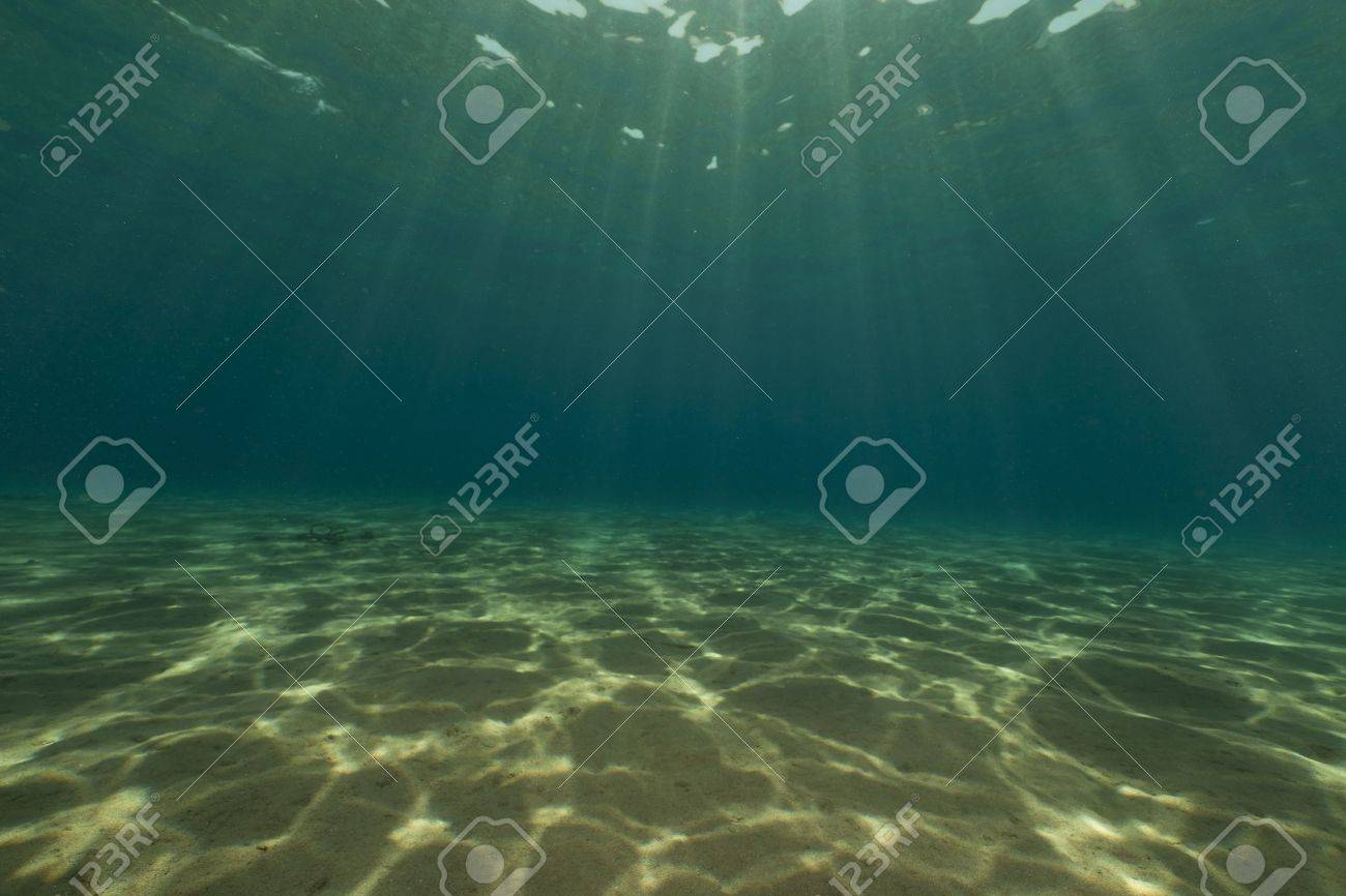 Tropical underwater life in the Red Sea. Stock Photo - 10879504