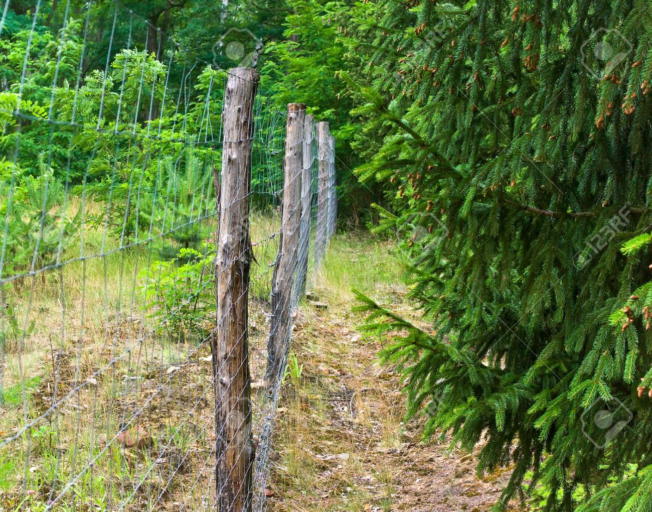 Zaun Aus Holz Fur Den Schutz Von Tieren Lizenzfreie Fotos Bilder
