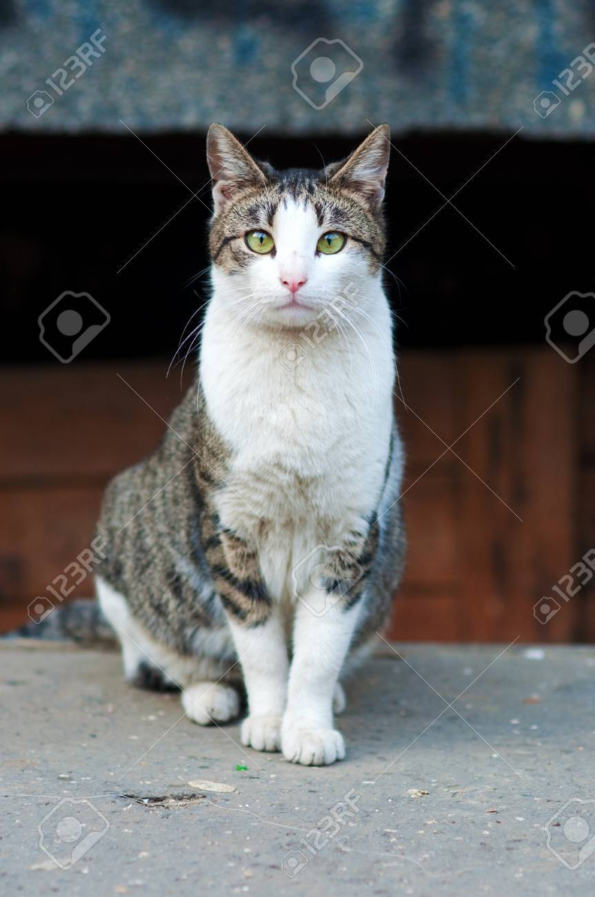 Large stray cat at the street in natural surroundings. Stock Photo - 9315591