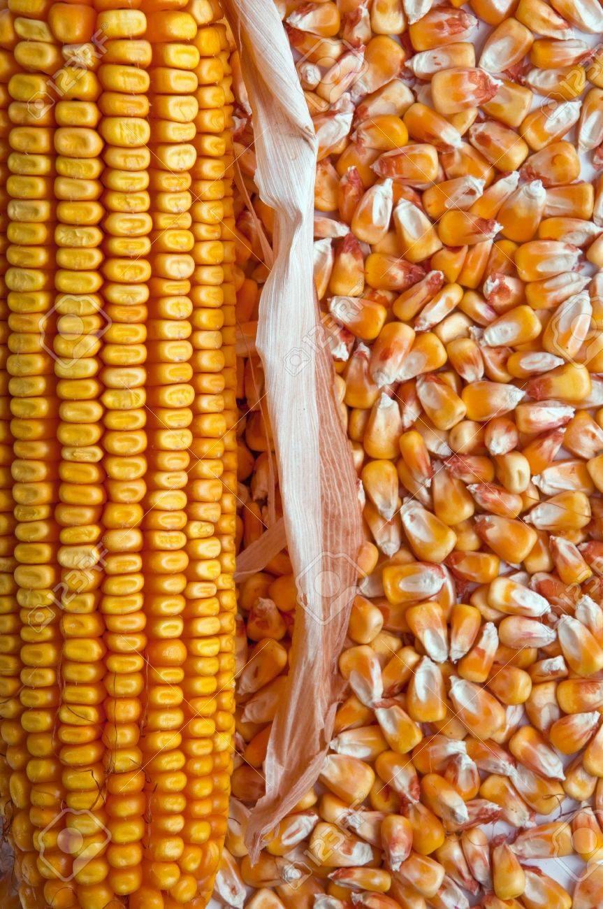 Beautiful yellow ear of corn on a background foliage Stock Photo - 10794390